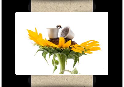Compostable Nespresso compatible capsules